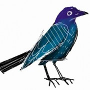 Grackle-sketch-1b-copy
